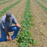 "Pappas Family: Farming in the ""Cantaloupe Center of the World"""