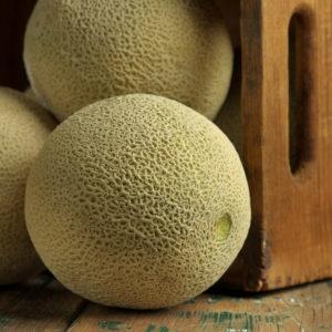 Cantaloupe Beauty_2235